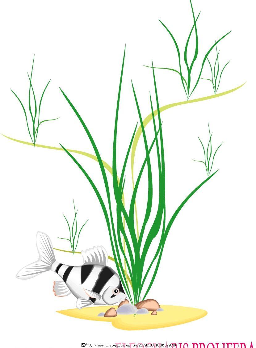 水生植物与鱼儿图片