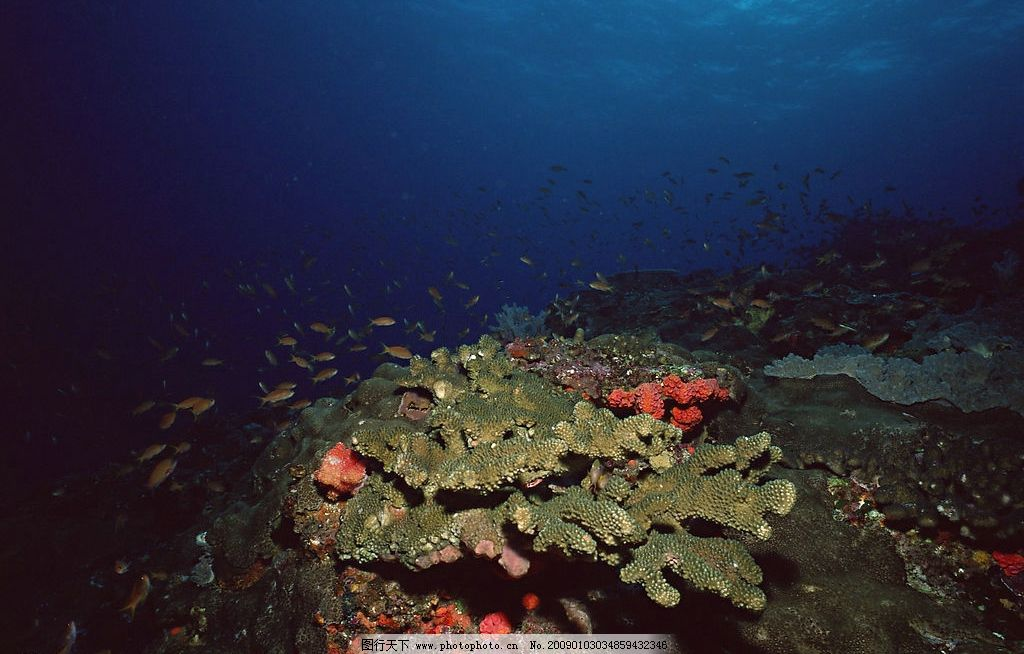 奇妙的海底世界 自然风景 自然风光 自然景观 海水 海洋 珊瑚