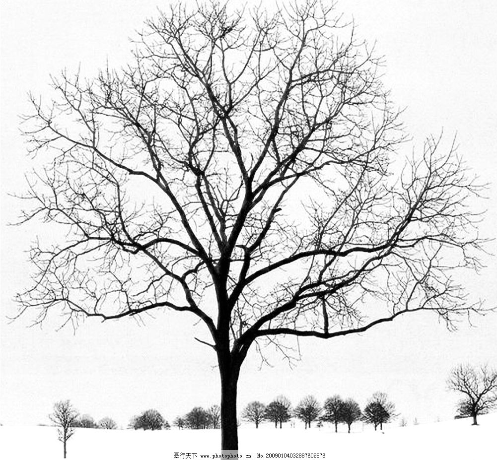 树的简笔画步骤如下