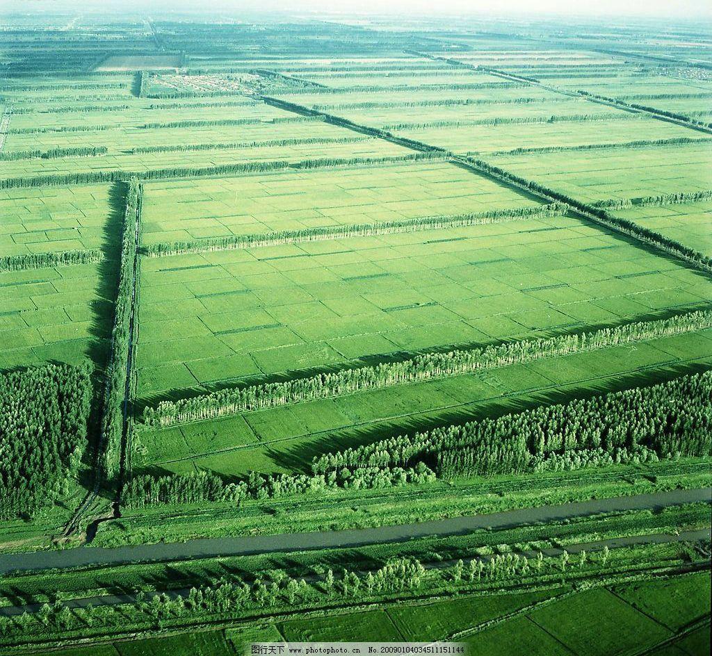 绿色田野图片