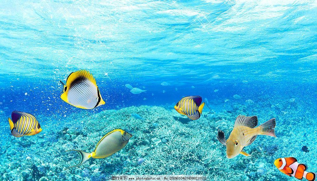 真实高清海底世界图片