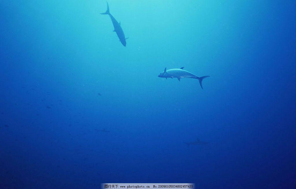 自然风光 自然景观 海水 海洋 珊瑚 海底世界 海洋生物 海底 鲨鱼
