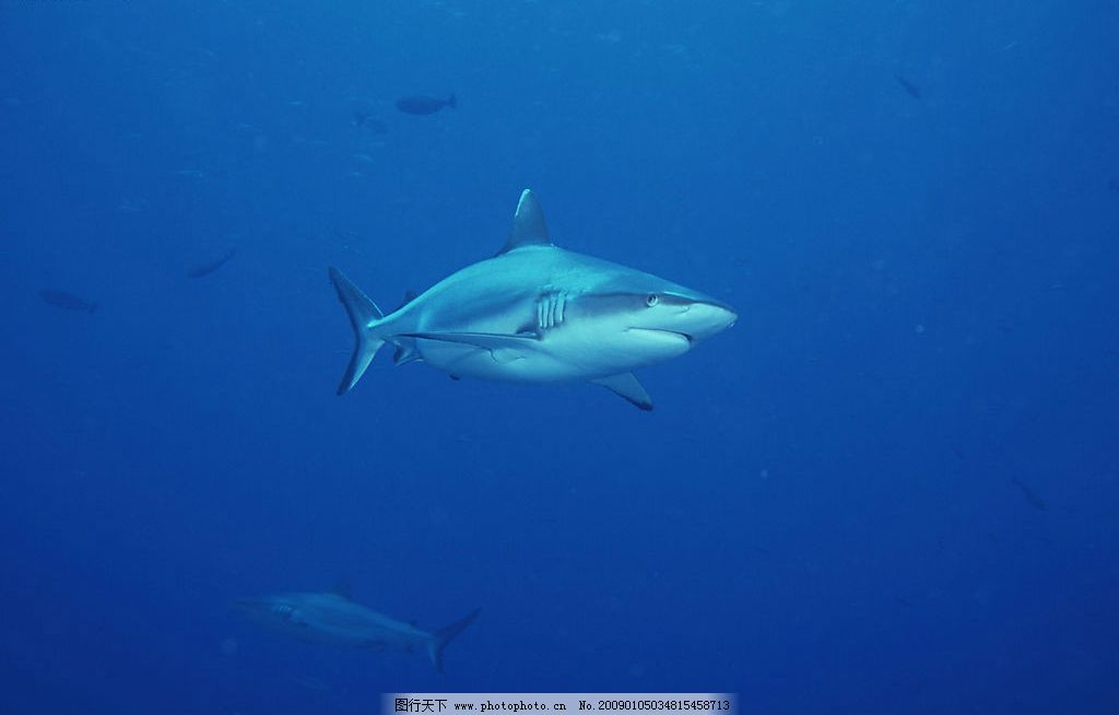 自然风景 自然风光 自然景观 海水 海洋 珊瑚 海底世界 海洋生物 海底