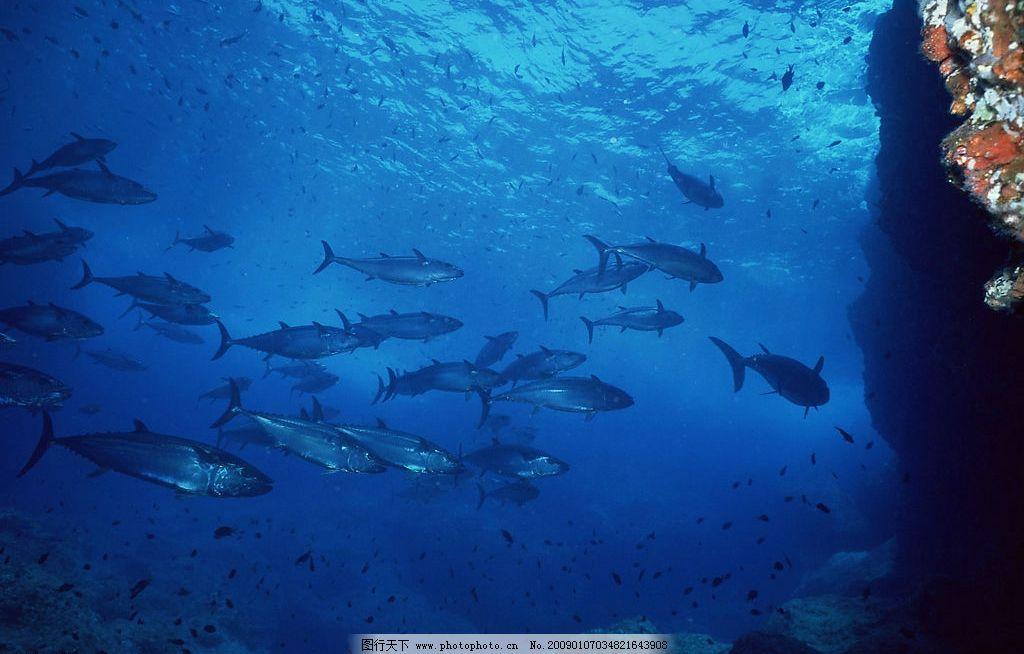 设计图库 自然景观 自然风景  海底鱼群图片 自然风景 自然风光 自然