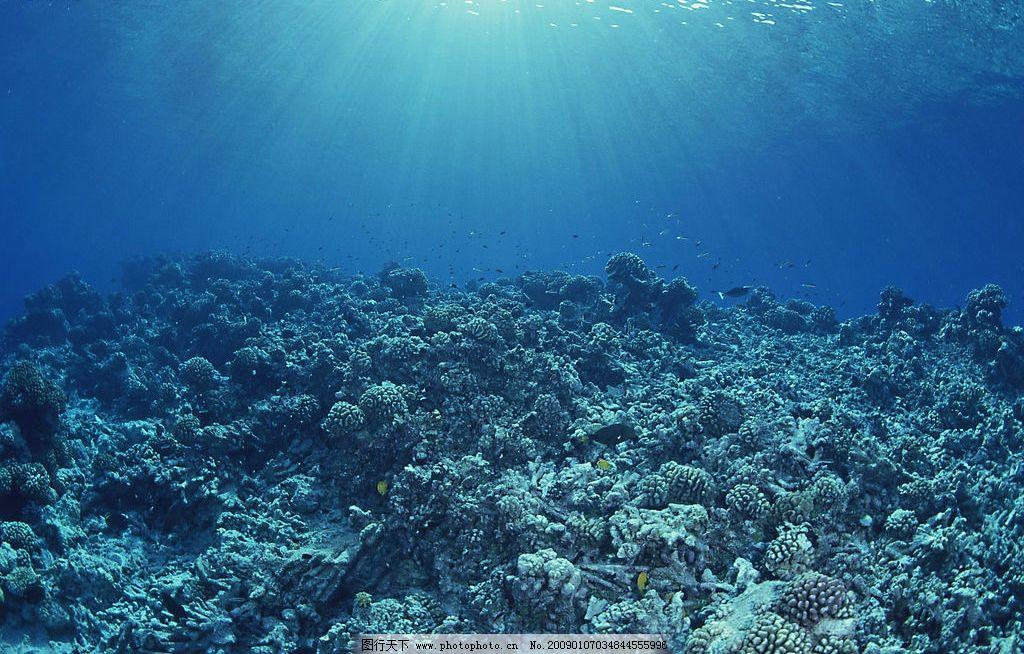 自然景观 海水 海洋 珊瑚 海底世界 海洋生物 海底 潜水 鱼群 鱼 礁石