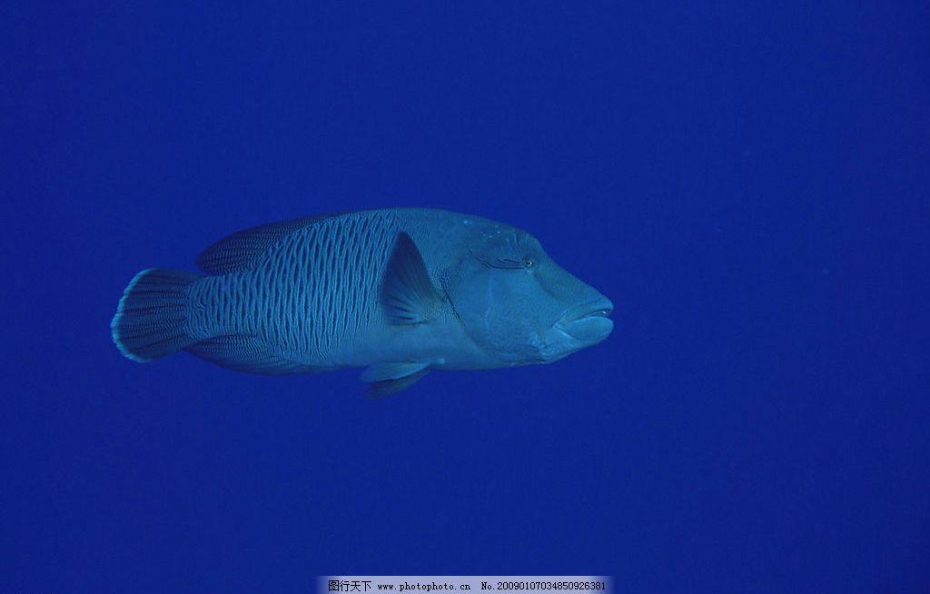 深海鱼图片 自然风景 自然风光 自然景观 海水 海洋 珊瑚 海底世界