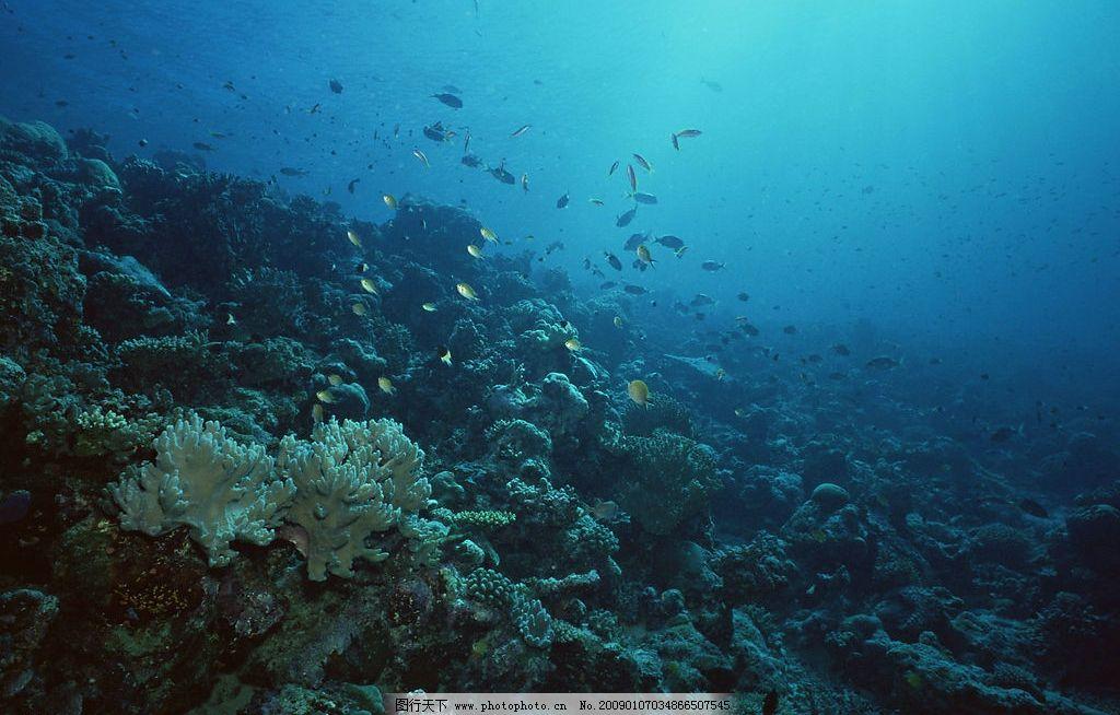 礁石 自然风景 自然风光 自然景观 海水 海洋 珊瑚 海底世界