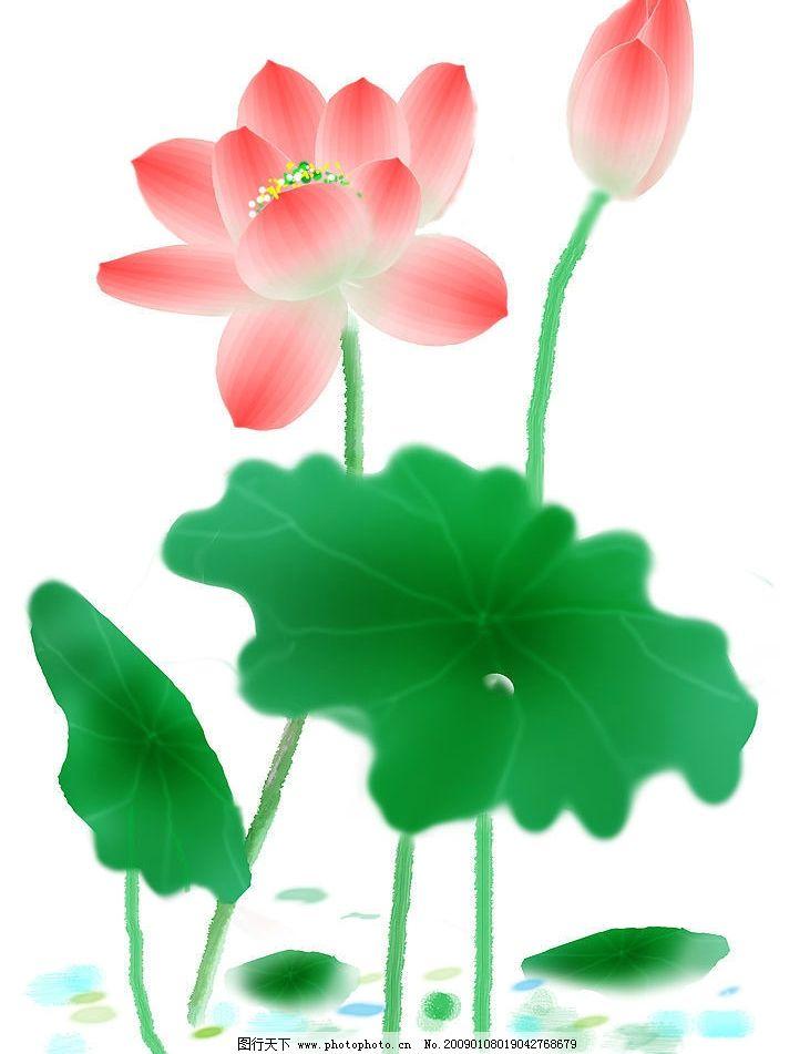 绘画荷花 荷花 莲蓬 荷叶 文化艺术 绘画书法 设计图库 300dpi jpg