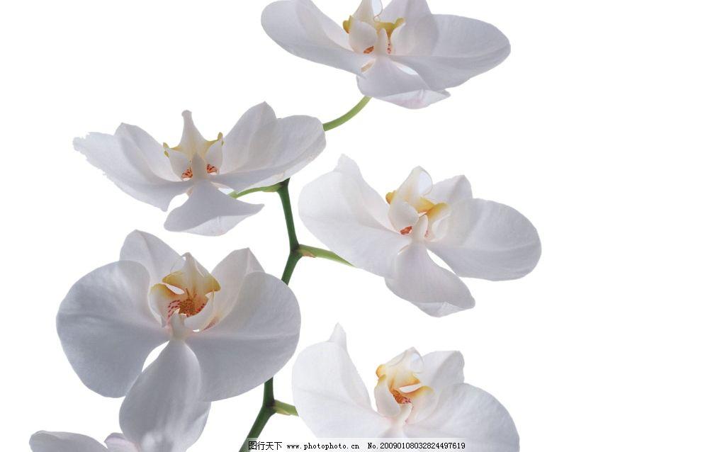 兰花 幽雅 高雅 鲜花 花朵 花 静物 写意 小品 psd分层素材 风景 源