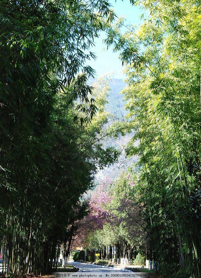 竹林小道图片,风景摄影 云南 大理 自然 地产 设计-图
