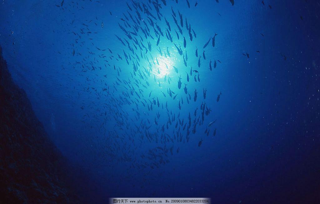 海底鱼群图片 自然风景 自然风光 自然景观 海水 海洋 珊瑚 海底世界