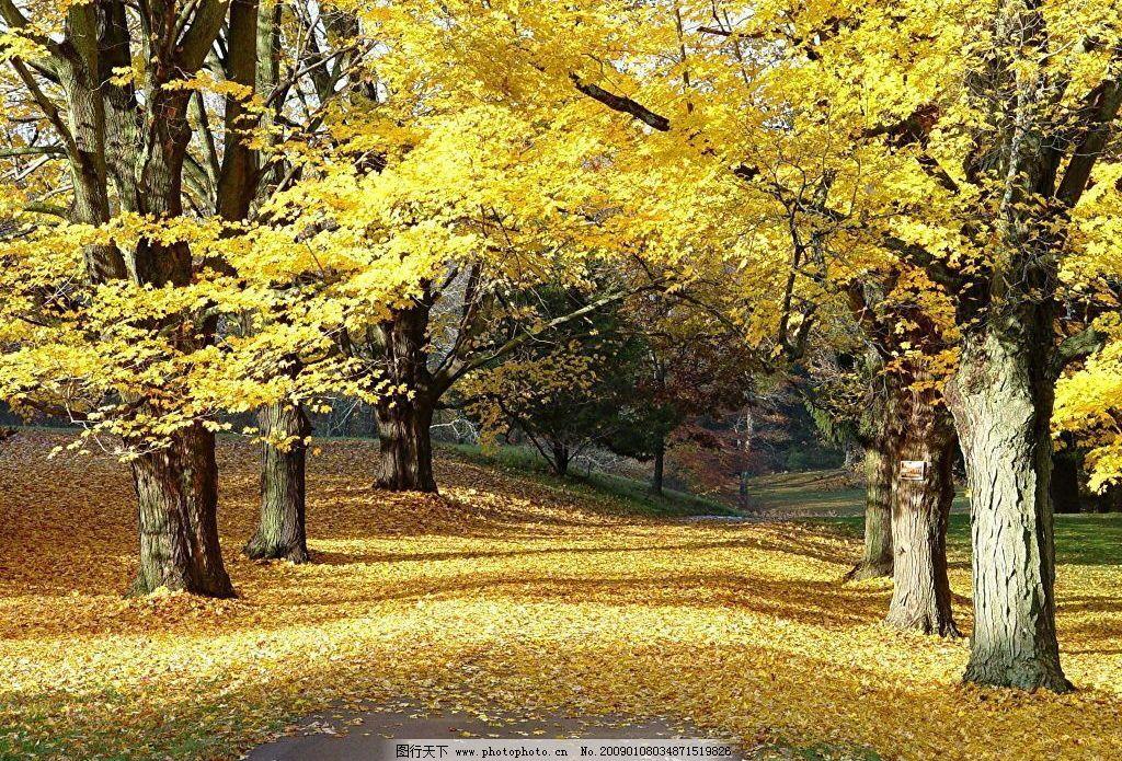 树林 秋天 楸树 自然景观 自然风景 摄影图库 72dpi jpg