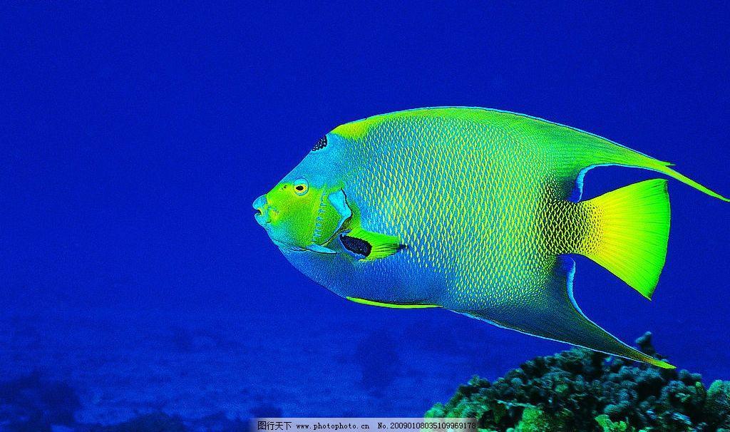漂亮的彩鱼 海底世界 海底动物 漂亮的鱼 摄影图库
