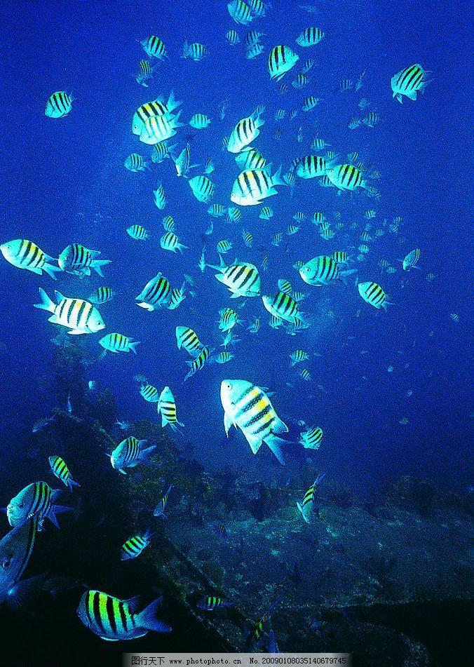 舞蹈的鱼群 海底世界 海底动物 鱼 群鱼 生物世界 海洋生物 摄影图库