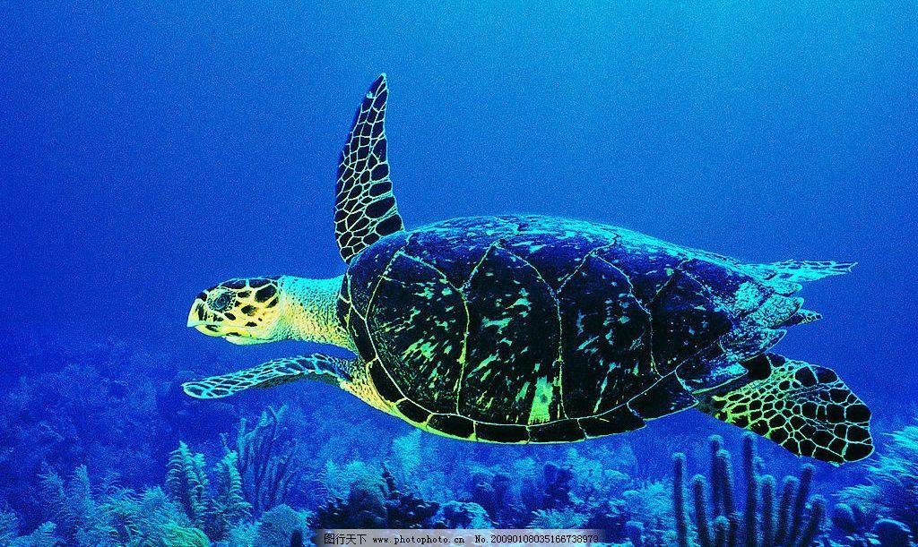 海龟 海底世界 海底动物 生物世界 海洋生物 摄影图库