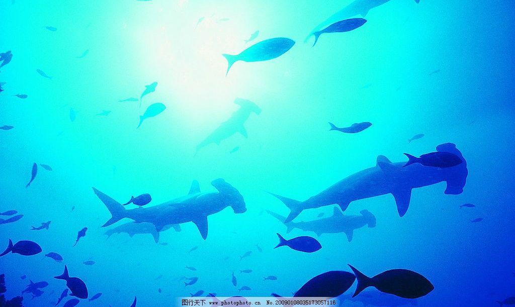群鱼的剪影 海底世界 海底动物 鱼 游 影 群 生物世界 海洋生物 摄影