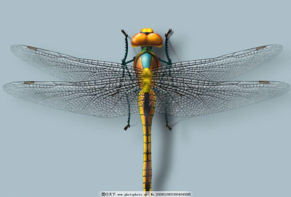 手绘蜻蜓图片