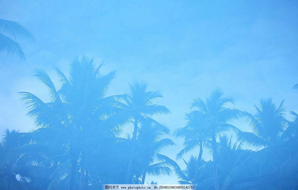 椰子樹圖片 自然風景 自然風光 自然景觀 藍天 白云 椰子樹 陽光明媚