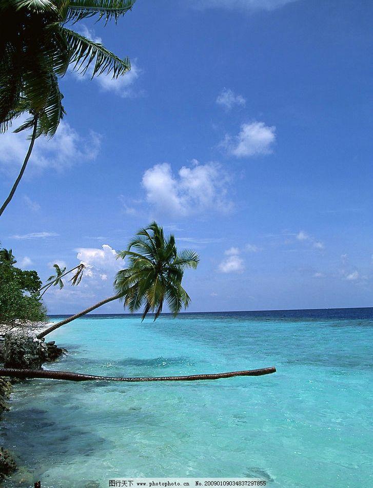 椰子树图片 自然风景 自然风光 自然景观 海水 海洋 热带 椰子树 椰子