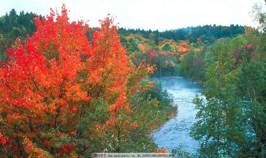 树林 树 树叶 浪漫 水 秋天 秋之语 素材 叶 美丽 安静 湖泊 蓝天