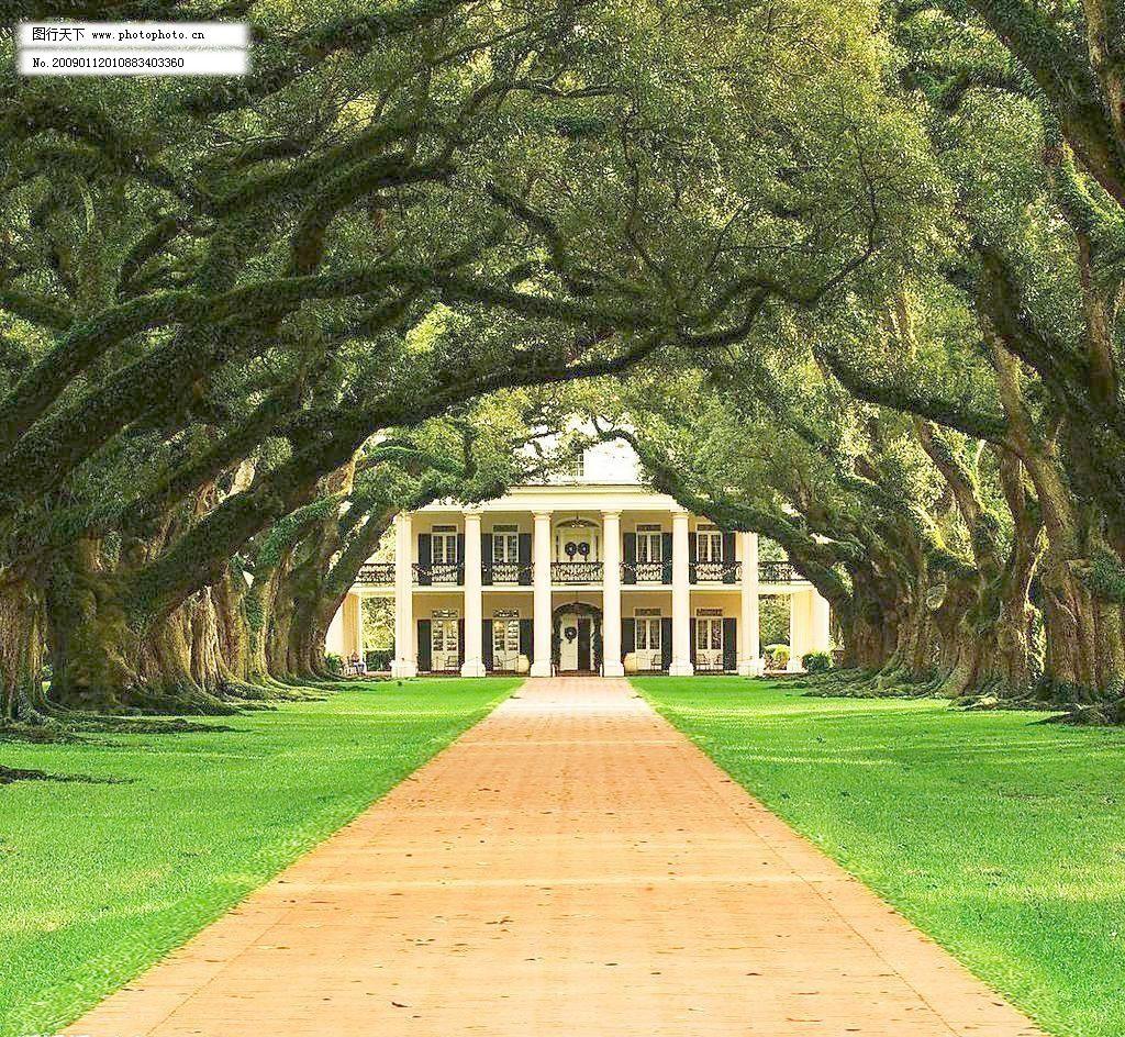 参天大树设计素材 参天大树模板下载 参天大树 欧式别墅 小路 草坪