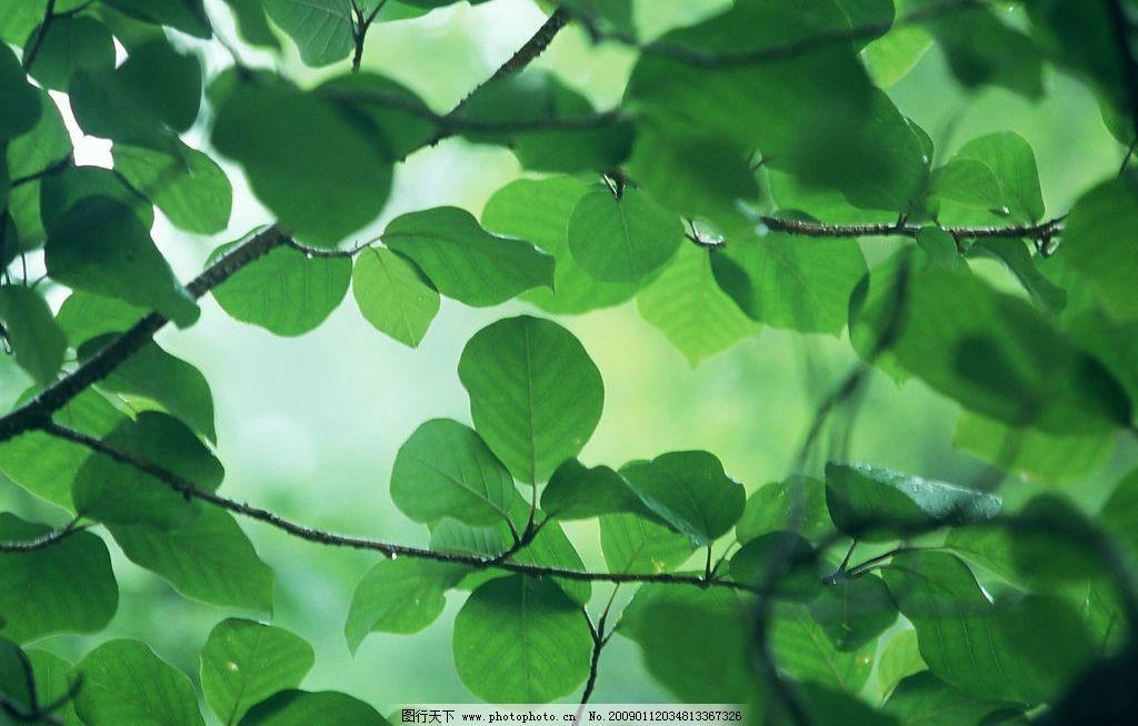 阳光森林 富尔特 素材辞典 绿叶 自然景观 自然风景 摄影图库