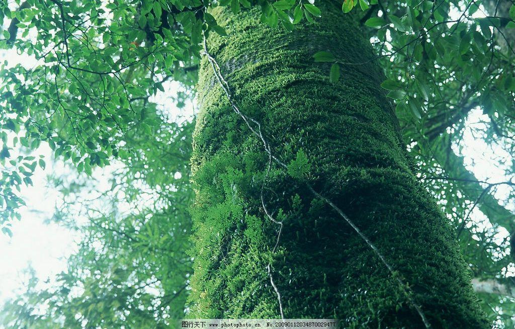 阳光森林 富尔特 素材辞典 森林 树林 绿色 自然景观 自然风景 摄影图