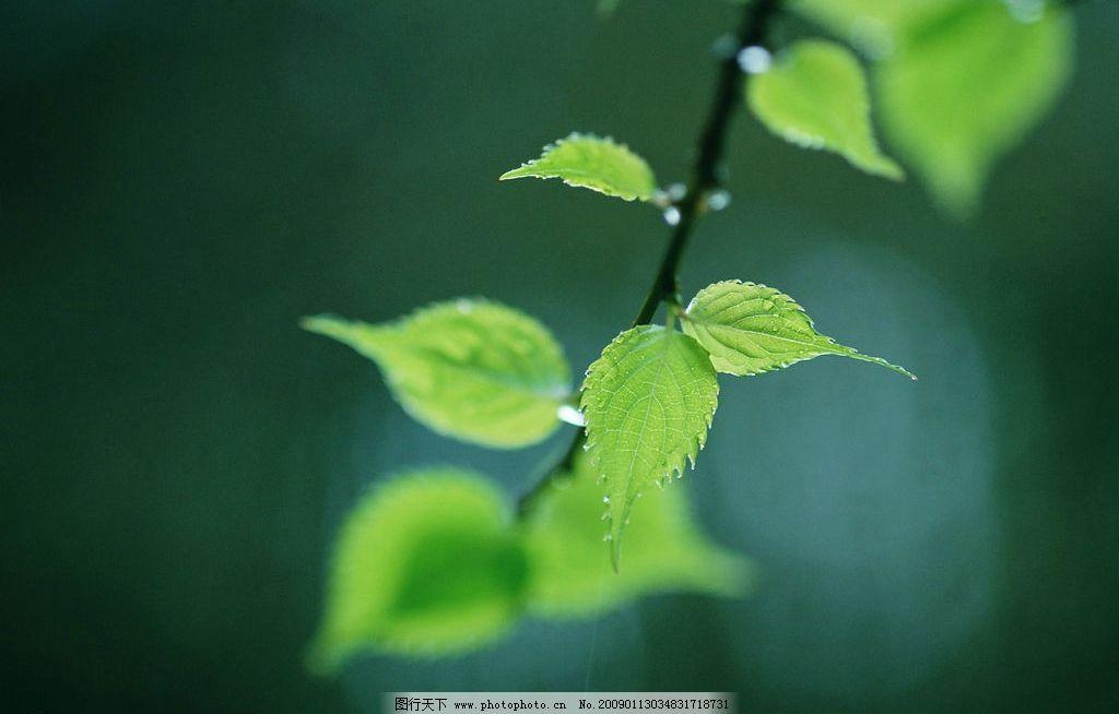 阳光森林 富尔特 素材辞典 树林 绿叶 自然景观 自然风景 摄影图库