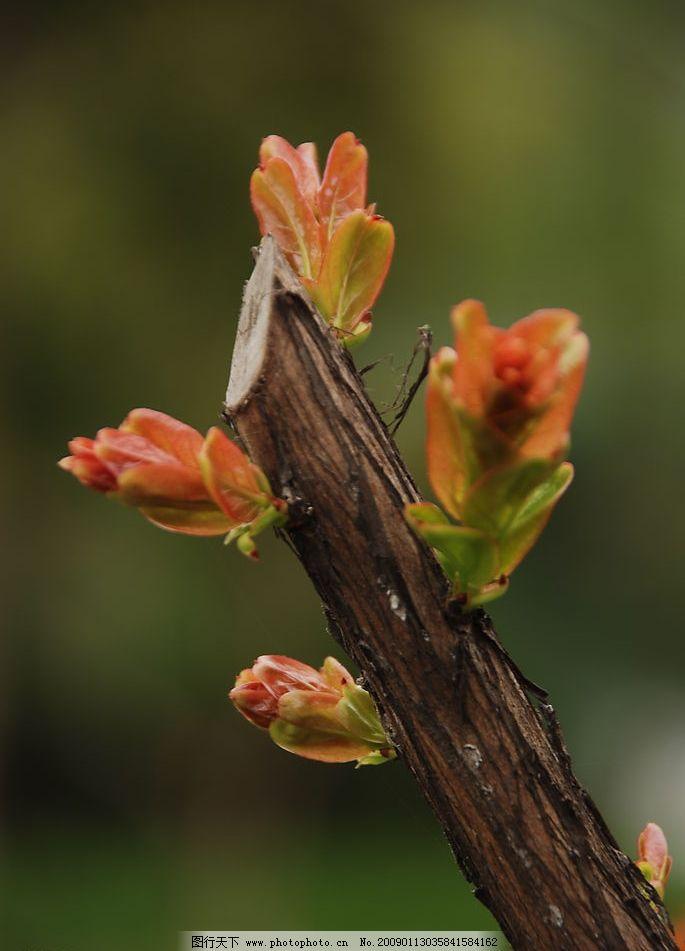 新芽 新生 嫩芽 发芽的树枝 嫩树枝 树枝 生物世界 树木树叶 摄影图库