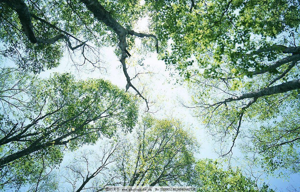阳光森林 富尔特 素材辞典 森林 树林 自然景观 自然风景 摄影图库