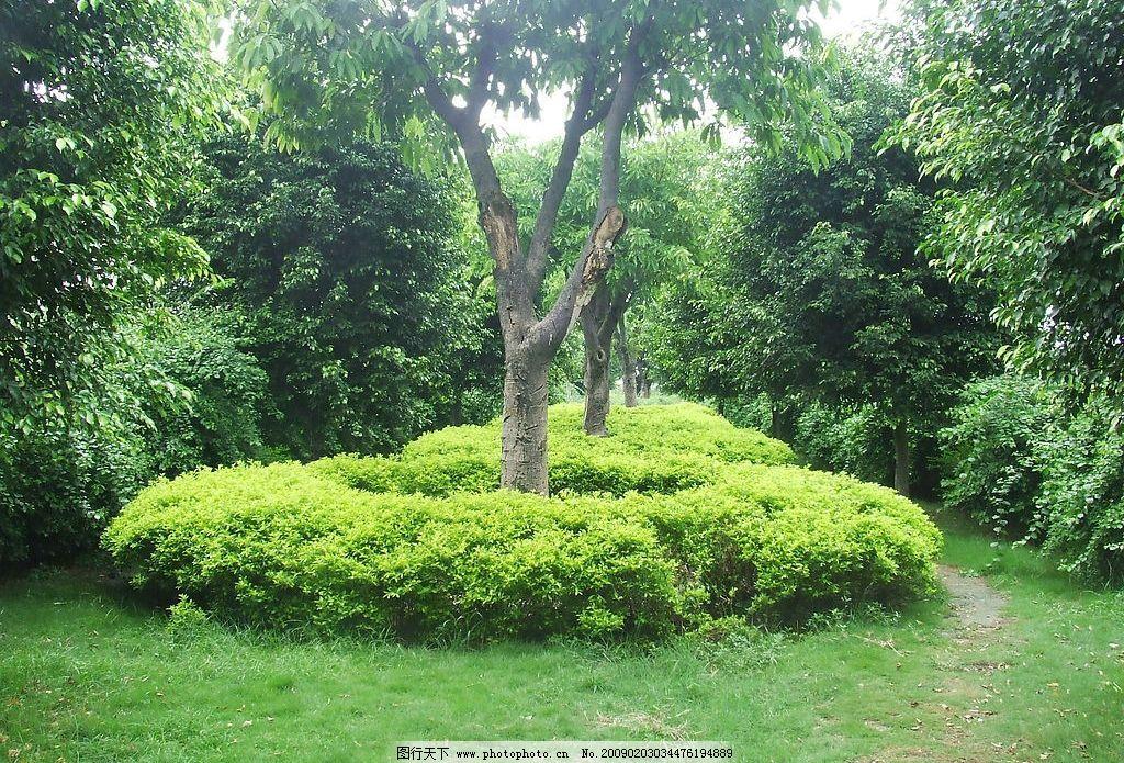 养眼绿树 树木 风光 绿色 自然景观 山水风景 摄影图库 72dpi jpg
