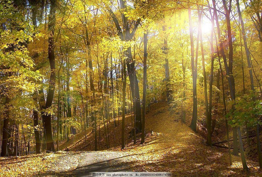 自然风景 树林 阳光 路 自然景观 摄影图库 72dpi jpg