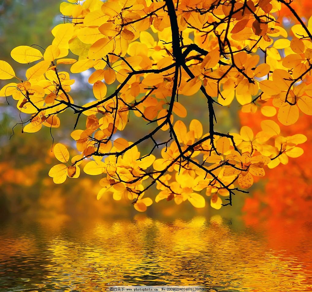 秋天树叶 树叶倒影水中 红叶 树枝 湖水 自然景观 自然风景 摄影图库