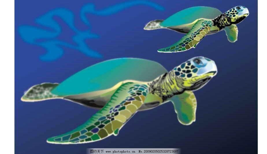海龟图片_海洋生物_生物世界_图行天下图库