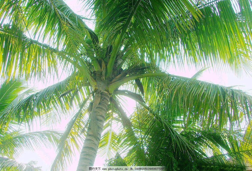 supreme椰子树壁纸