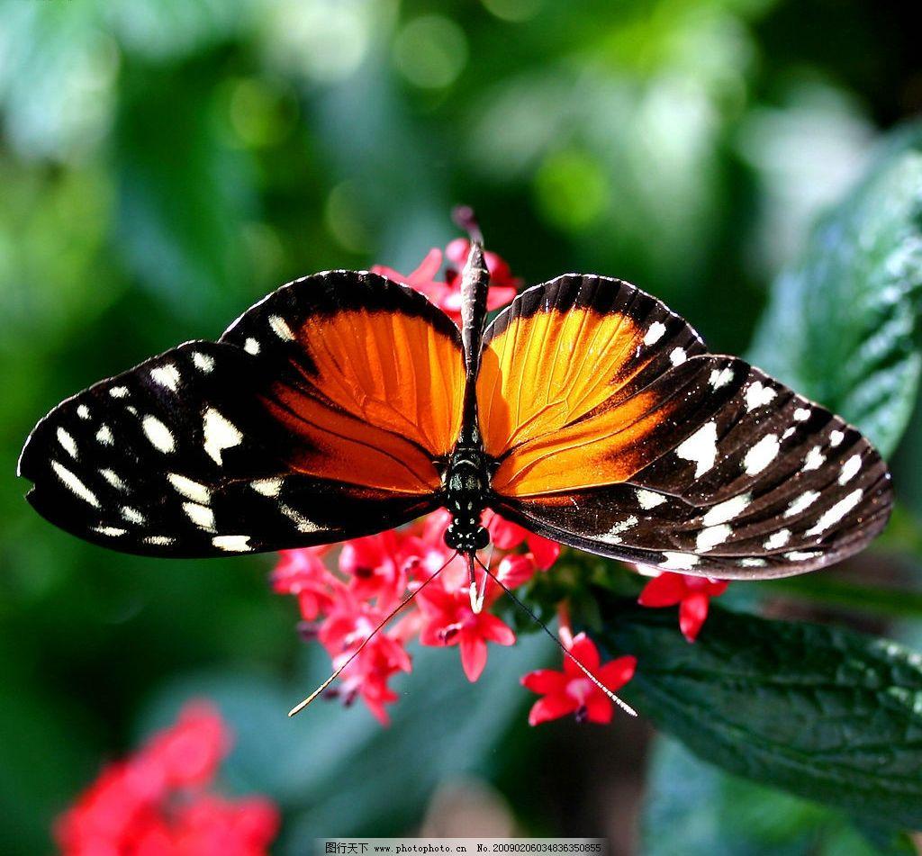 蝴蝶采花 花朵 绿色叶子 自然景观 自然风景 摄影图库