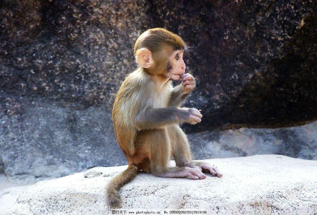 猴子 海南 南湾猴岛 生物世界 野生动物 摄影图库