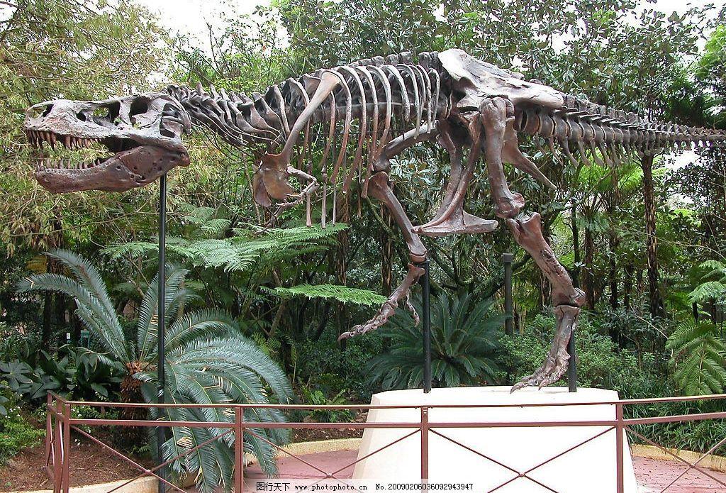 恐龙骨架图片