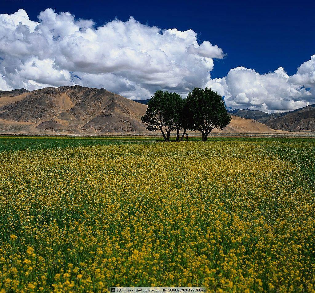 油菜花 高山 树木 蓝天 白云 旅游摄影 自然风景 摄影图库 300dpi jpg