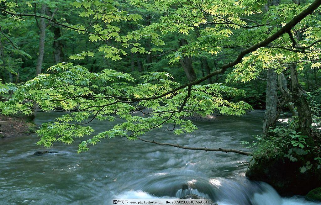优美风光 诗意 自然风景 摄影 空气 新鲜 水 河流 植物 大树