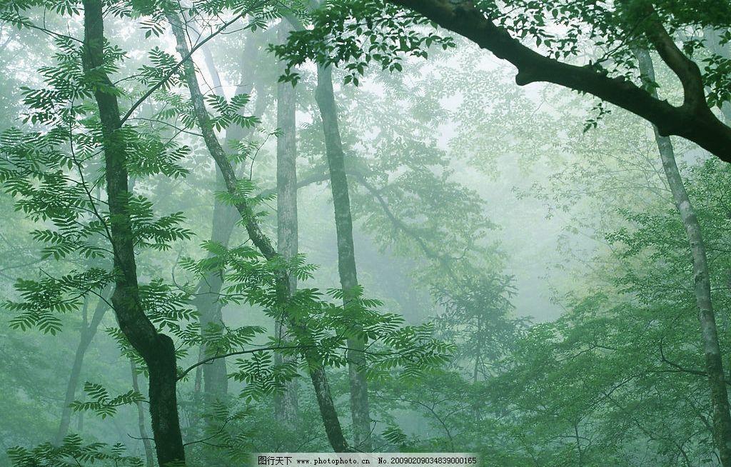 阳光森林图片_自然风景