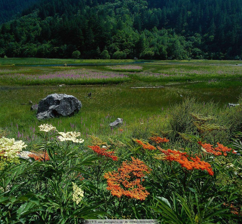 草滩 树林 河滩 草地 花朵 石头 野花 旅游摄影 自然风景 摄影图库