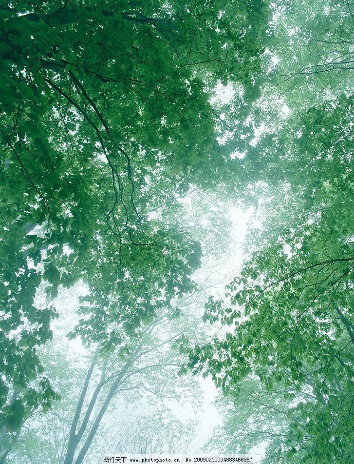 壁纸 风景 森林 桌面 727_951 竖版 竖屏 手机