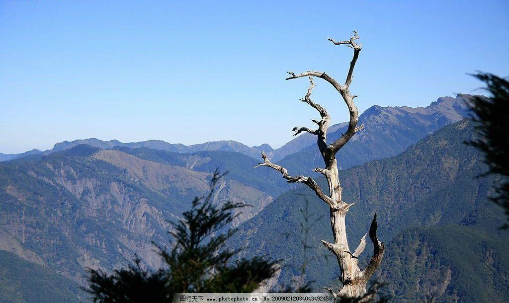 云海 樱花 森林 森林游乐区 国家风景区 阿里山森林火车 旅游摄影