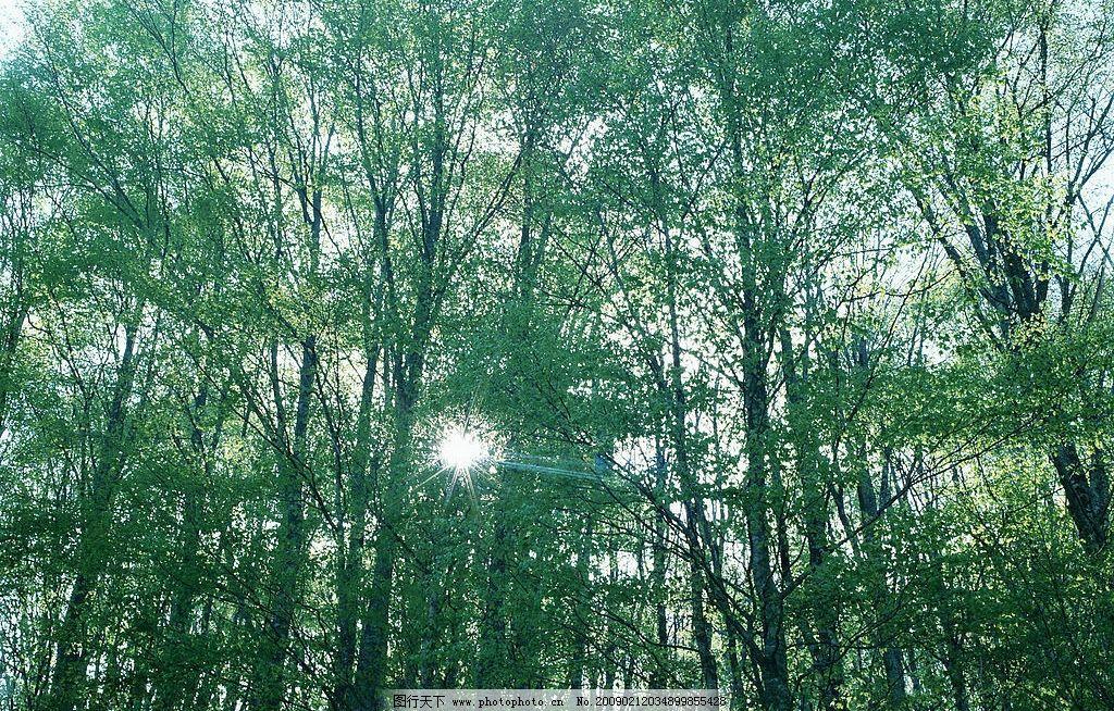 阳光森林图片