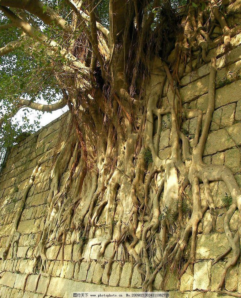老树根 树根 旅游摄影 自然风景 摄影图库 72dpi jpg