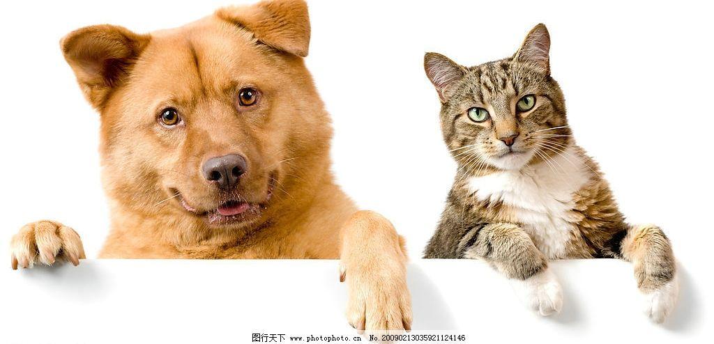 可爱的猫和狗图片