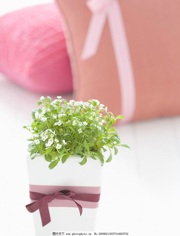 静物 富尔特素材辞典 蝴蝶结 花朵 绿叶 花瓶 靠垫 生活百科 家居生活