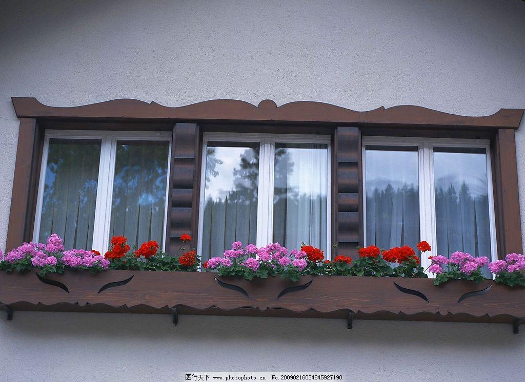 外窗绿化 窗外风景 花 植物 窗帘 玻璃 摄影图库