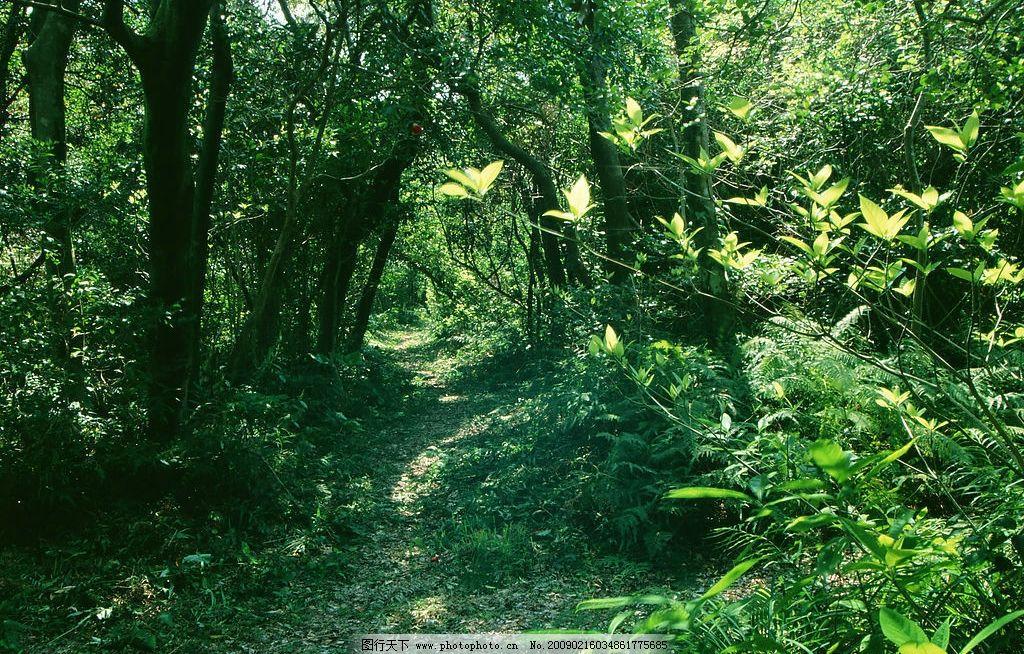 阳光森林 素材辞典 富尔特 森林 树 绿色 自然景观 自然风景 摄影图库